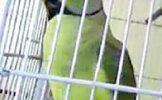 पोपटाला बंदिस्त करणे पडले महागात; न्यायालयाने ठोठावला 25 हजाराचा दंड